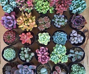 flowers, succulent, and plants image