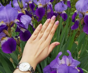 flowers, nails, and violet image