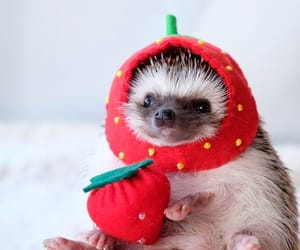 animals, hedgehog, and strawberry image