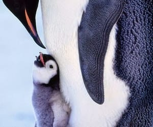 animal, penguin, and baby image