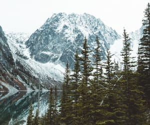 snow, wallpaper, and trees image