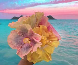 beach, cotton candy, and flowers image