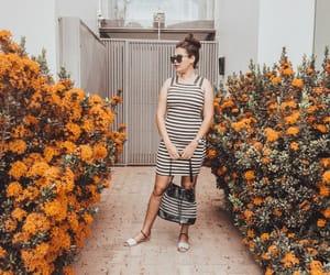 flores, laranja, and white image