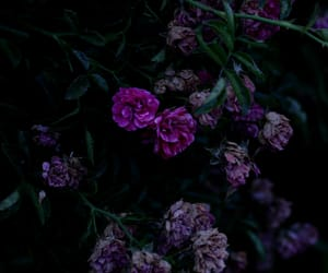 photographers on tumblr, original photographers, and withered roses image