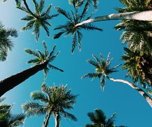 holiday, palms, and sky image