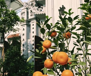 backpacking, hanoi, and orange image