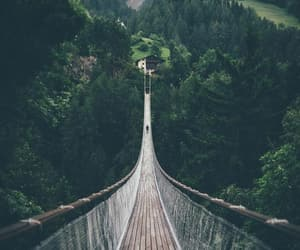 bridge, trees, and green image