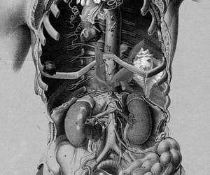 body, art, and anatomy image