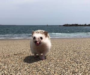 animals, beach, and hedgehog image