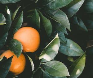 fruit, summer, and orange image