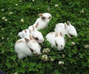 bunny, green, and rabbit image