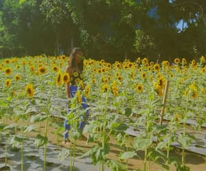 outfit, summer, and sunflower image