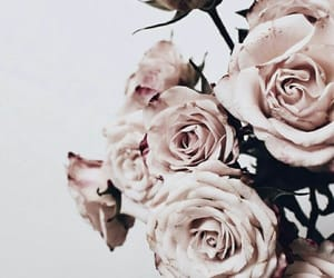 aesthetic, baby, and flowers image