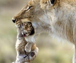 cub, family, and mother image