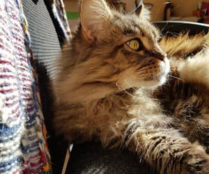 cat, sunlight, and wild image