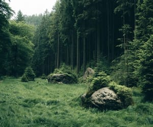 forest, peaceful, and grass image