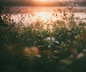 meadow, ethereal, and botany image