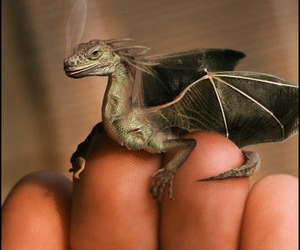 dragon, harry potter, and fairytale image