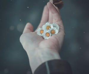 Image by Halima Elq