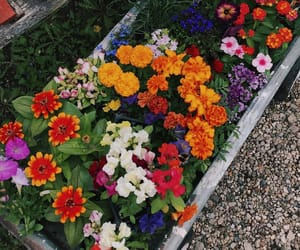 colorful, flowers, and garden image