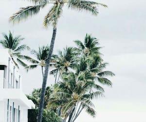 beautiful, summer, and beach image