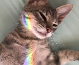 cat, cute, and rainbow image