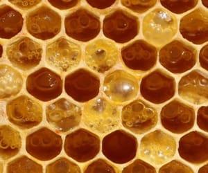 theme, honey, and yellow image