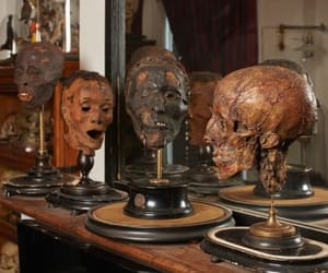 curiosities, victorian, and heads image