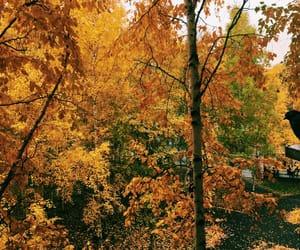 autumn, like, and memory lane image
