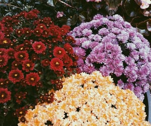 aesthetic, colors, and flowers image