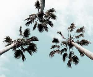 blue, nature, and palm trees image