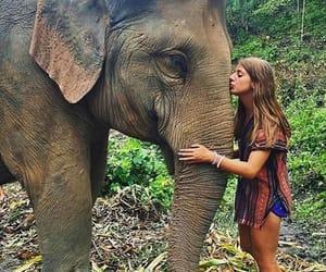 animals, elephants, and girls image