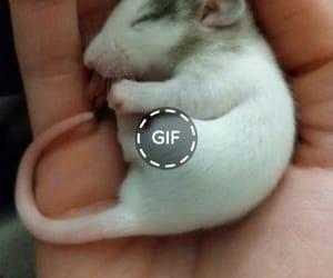 amazing, animal, and funny image
