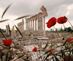 flowers, ruin, and travel image