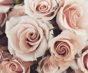 aesthetics, flower, and girl image