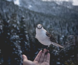 bird, landscape, and explore image