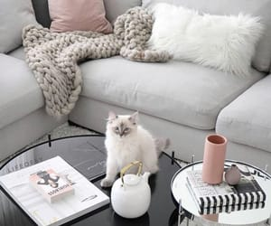 cat, home, and room image