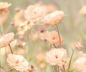 blush, flowers, and green image