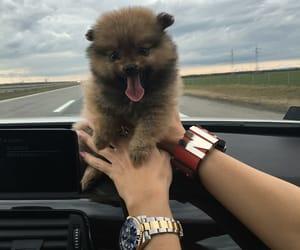 boo, love, and dog image