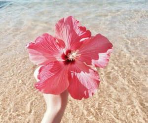 beach, beautiful, and flowers image