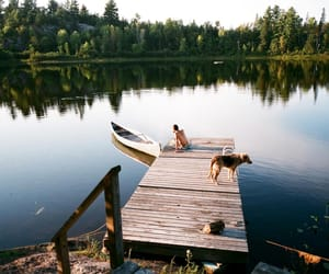 dog, lake, and nature image