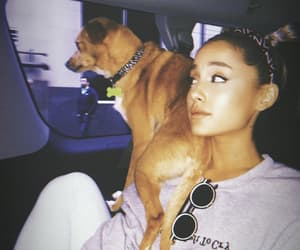 ariana grande, Toulouse, and dog image