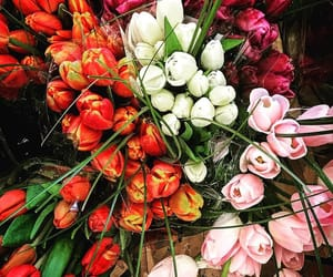 bunches, colors, and florist image