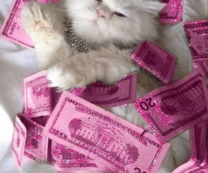 pink, cat, and money image