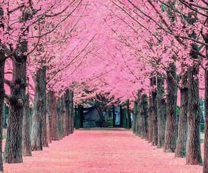 nature, pink, and street image