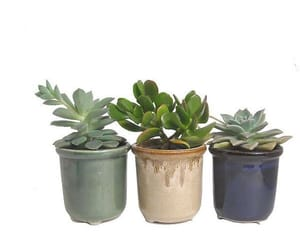 plants and png image