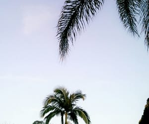 nature, palmtrees, and pretty image