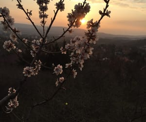 flover and sunset image