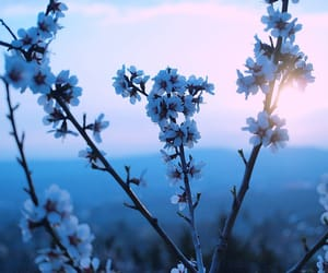 blue, flowers, and pretty image