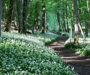 photography and woodland image
